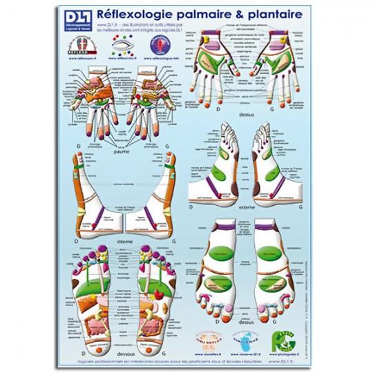 oster Planche Zones de réflexologie plantaire et palmaire A3 PLASTIFÉ A3 42 x 30 cm