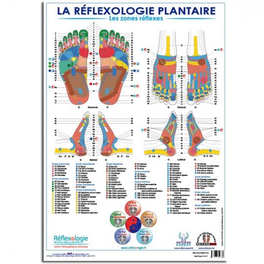 """Poster français Planche Mireille MEUNIER """"La Réflexologie Plantaire"""" - Les zones réflexes A3 (30 cm x 42 cm) PLASTIFÉ"""