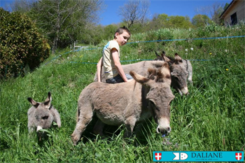 """C'est là, sur le site """"ESCAL-ANE"""" que nos ânes vont au rythme du travail quotidien et des fêtes du village."""