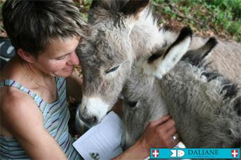 La traite des ânesses est effectuée dans le plus grand respect des animaux, chose précieuse aux yeux de la créatrice des savons DALIANE. Elle se déroule dans la confiance et avec la plus grande des douceurs, afin que l'ânesse nous offre la quantité idéale de ce précieux lait, et toujours en présence de son ânon.