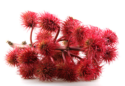 Découvrez une huile de ricin pour les cheveux. L'huile de ricin est idéale pour la croissance des cheveux et pour leur beauté au quotidien. Trouver de l'huile de ricin chez www.inenuy.fr ou huile de ricin en gironde bassin d'arcachon andernos (33)