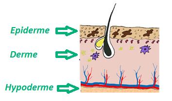 découvrez un schéma de la composition de la peau avec l'épiderme, le derme et le hypoderme